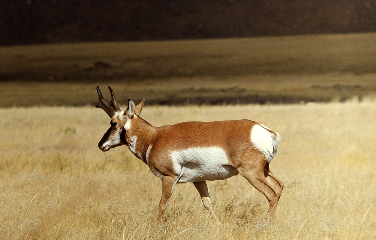 Preparing For Your First Rifle Antelope Hunt